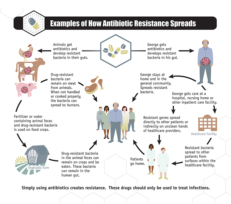 WHO   Infographics: Antimicrobial resistance in the food chain